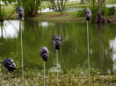 Wallace, Louisiana - The Whitney Plantation, a sugar plantation that has been turned into a museum to tell the story of slavery. Sculptured heads on poles remind visitors of an 1811 slave revolt. Part... - Jim West - 16-05-2015
