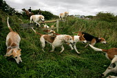 The South Durham Hunt Trimdon, Co Durham - Mark Pinder - 2000s,2004,animal,animals,blood sport,canine,country,countryside,County Durham,dog,dogs,domesticated ungulate,domesticated ungulates,equestrian,equine,fox,fox hunting,FOXES,foxhound,foxhounds,horse,ho