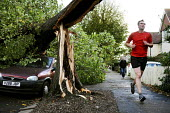 A jogger runs past a tree that has fallen onto a parked car. The morning after the storm in Brighton and Hove, East Sussex. - Nick Rain - 2010s,2013,accident,accidental,accidents,AUTO,AUTOMOBILE,AUTOMOBILES,AUTOMOTIVE,autumn,AUTUMNAL,car,cars,CLIMATE,conditions,crushed,damage,damaged,danger,dangerous,dangers,DIA,exercise,exercises,exerc