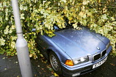 A tree that has fallen onto a parked car. The morning after the storm in Brighton and Hove, East Sussex. - Nick Rain - 2010s,2013,accident,accidental,accidents,AUTO,AUTOMOBILE,AUTOMOBILES,AUTOMOTIVE,autumn,AUTUMNAL,BMW,car,cars,CLIMATE,conditions,crushed,damage,damaged,danger,dangerous,dangers,DIA,fallen,falling,gale,