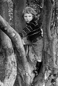 Young boy climbing a tree. - Paul Carter - 01-08-1980