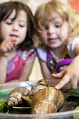 Girls play with giant snails, Norland Nursery, Bath. - Paul Box - ,2010s,2012,animal,animals,BIOLOGICAL,biology,CARE,carer,carers,child,child care,childcare,CHILD-CARE,CHILDHOOD,childminding,children,CRECH,creche,creches,day care,daycare,EARLY,early years,edu,educat