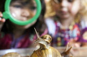 Girls play with giant snails, Norland Nursery, Bath. - Paul Box - 2010s,2012,animal,animals,BIOLOGICAL,biology,CARE,carer,carers,child,child care,childcare,CHILD-CARE,CHILDHOOD,childminding,children,CRECH,creche,creches,day care,daycare,EARLY,early years,edu,educate