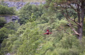 Zip World Velocity, longest and fastest zip line in Europe, Penrhyn Quarry, Bethesda, North Wales - Paul Box - 13-08-2013