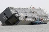 Salvage workers climbing on the ship. The Hoegh Osaka car carrier aground on Bramble Bank between Southampton and the Isle of Wight after it sailed from the Hampshire port with its cargo of 1,400 cars - Paul Box - 07-01-2015