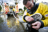 A blocked pump is cleared by a firefighter as they pump water from flooded properties in Datchet, Berkshire which has been flooded after the Thames burst its banks. - Paul Box - ,2010s,2014,adult,adults,BAD,berkshire,CLIMATE,Climate Change,conditions,DIA,eni,environment,Environmental Issues,EXTREME,Fire and Rescue,fire brigade,Fire Engine,firefighter,firefighters,fireman,fire