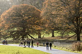 Walkers, Ashton Court Estate, Bristol. - Paul Box - 2010s,2014,autumn,autumnal,boy,boys,Broadleaf Tree,child,CHILDHOOD,children,cities,city,Council Services,Council Services,country,Country Park,Country Parks,countryside,Court,eni,environment,Environme