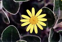 Flower and leaves. - Paul Box - 2000s,2001,ENI environmental issues,flora,flower,flowering,flowers,foliage,garden,GARDENS,leaves,life,nature,petal,petals,plant,plants