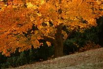 Autumn leaves , tree on slope - Paul Box - 01-11-2003