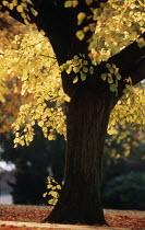an autumnal scene in St Andrews park bristol - Paul Box - 01-11-2003