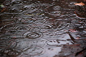 Raindrops splashes forming a puddle - Paul Box - 01-12-2003