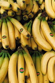 a stack of bananas - Paul Box - 2000s,2003,Banana,bananas,bunch of,bunches,del,EBF Economy,ENI Environmental issues,food,FOODS,fruit,FRUITS,healthy,Healthy Eating,monte,wellbeing