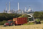 A combine harvester cuts a field of whole crop for silage. Pembrokeshire, Wales. Texaco oil refinery is in the background. - Paul Box - 06-08-2009