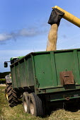 A combine harvester loading a tractor with barley grain, Pembrokeshire, Wales. - Paul Box - 07-08-2009