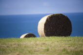 Round hay bales, Pembrokeshire, Wales. - Paul Box - 2000s,2009,agricultural,agriculture,bails,bale,baler,bales,capitalism,capitalist,crop,crops,EBF,Economic,Economy,farm,farmed,farming,farms,field,fields,grower,growers,growing,harvest,harvesting,hay,ha