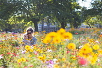 Flower meadow, St Andrews Park, planted to prevent Anti Social behaviour, Bristol. - Paul Box - 07-08-2014