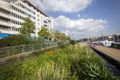 SUDS floating reed beds Bristol docks, Bristol. - Paul Box - ,2010s,2013,apartment,apartments,Bristol,building,buildings,cities,city,DOCK,docks,EBF,Economic,Economy,eni,environment,environmental,Environmental Issues,flat,flats,floating,garden,gardens,grass,harb
