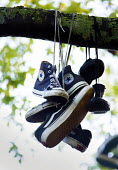 Skateboarders hang there old skate shoes in a tree, College Green, city centre, Bristol. - Paul Box - 2010s,2014,ACE,Bristol,Broadleaf Tree,cities,city,College,COLLEGES,culture,of,pair,scene,scenes,shoe,shoes,street,streets,trainers,TREE,trees,urban
