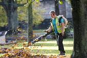 Autumn leaf blowing, College Green, city centre, Bristol. - Paul Box - 16-10-2014