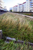 SUDS reed and wild grass beds at new development, Bristol docks, Bristol. - Paul Box - 2010s,2014,apartment,apartments,Bristol,building,buildings,cities,city,development,DOCK,docks,EBF,Economic,Economy,eni,environment,environmental,Environmental Issues,flat,flats,garden,gardens,grass,ha