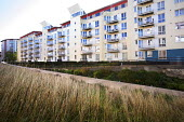 SUDS reed and wild grass beds at new development, Bristol docks, Bristol. - Paul Box - 16-10-2014