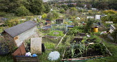 St Werburghs allotments, Bristol. - Paul Box - 17-10-2014