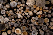 A pile of felled logs for firewood in a log store, Chateaux DOex, Switzerland. - Paul Box - 22-01-2006
