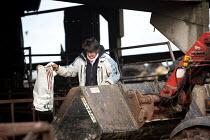 A woman farmworker feeding the cattle on a farm in Wales. - Paul Box - 15-02-2010