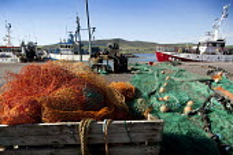 The fishing fleet moored in Dingle harbour, Ireland. - Paul Box - Irish,2010,2010s,attraction,boat,boats,coast,coastal,coasts,dock,docks,dockside,EBF,Economic,Economy,eni,environment,Environmental Issues,eu,Europe,european,europeans,eurozone,fisheries,fishery,fishin