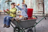 A brother and sister sitting in a wheelbarrow of apples they picked from their garden, near Wrexham, North Wales. - Paul Box - 2010s,2011,apple,apples,boy,boys,brother,brothers,child,CHILDHOOD,children,crop,crops,female,females,fruit,fruits,garden,gardens,girl,girls,grow,grower,growers,growing,harvest,harvesting,having fun,HO