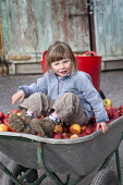 A girl sitting in a wheelbarrow of apples from her garden, near Wrexham, North Wales. - Paul Box - 2010s,2011,apple,apples,child,CHILDHOOD,children,crop,crops,female,females,fruit,fruits,garden,gardens,girl,girls,grow,grower,growers,growing,harvest,harvesting,having fun,HORTICULTURAL,horticulture,j