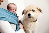 A 3 week old baby in a sling with the pet dog, Bristol. - Paul Box - &,2010s,2012,adult,adults,and,babies,baby,boy,boys,Child,CHILDHOOD,children,cities,city,dog,DOGS,domestic,EARLY YEARS,families,FAMILY,FEMALE,home,infancy,infant,infants,Jack,jealous,juvenile,juveniles