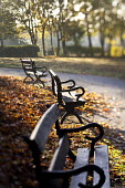 Autumn scene at St Andrews Park Bristol. - Paul Box - &,2010s,2012,autumn,autumnal,beach,BEACHES,bench,benches,cities,city,COAST,coastal,coasts,Council Services,Council Services,eni,environment,Environmental Issues,leaf,leaves,Leisure,LFL,LIFE,lifestyle,