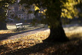 Autumn scene at St Andrews Park Bristol. - Paul Box - 2010s,2012,autumn,autumnal,beach,BEACHES,bench,benches,cities,city,COAST,coastal,coasts,Council Services,Council Services,eni,environment,Environmental Issues,leaf,leaves,Leisure,LFL,LIFE,local author