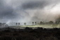 The Quantock Hills, Somerset. - Paul Box - 18-11-2014