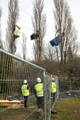 Bailiffs and security gards move in to evict Stapleton Allotment tree-top protesters, Bristol. The protesters are objecting to the building on allotments and cutting down of trees for the MetroBus. - Paul Box - 12-03-2015