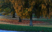 Autumn leaves, abstract. Ashton Court Bristol - Paul Box - 01-10-2003