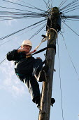A British Telecom engineer works up telegraph pole - Paul Box - 2000s,2003,blue sky,communicating,communication,dangerous work,EBF Economy,employee,employees,Employment,engineer,engineering,engineers,europeregi,fault faults,hard hat,harness,hat,hats,hazard hazardo