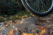 A mountain Bike tyre on rough ground - Paul Box - 10-03-2004