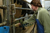 Defra organic farming scheme. A rented dairy farm in gloucestershire. Milking the cows. - Paul Box - 02-07-2004