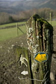 A footpath sign in North Wales. - Paul Box - 10-12-2005