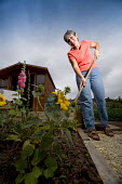 A woman gardening at her allotment. Bristol - Paul Box - 15-12-2005