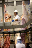 A meat processing plant in Wales. Many of the workers are from Portugal, Greece and Poland. The meat is produced solely for Tesco. - Paul Box - 2000s,2006,abattoir,abattoirs,agency,beef,boss,bosses,bovine,butchery,capitalism,capitalist,Carcass,carcasses,check,checking,cut,cutting,Diaspora,eastern,EBF Economy,eu,european,europeans,FACTORIES,fa
