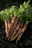Homegrown carrots, that have be grown with compost, made from recycled biodegradable material. - Paul Box - ,2000s,2005,at,carrot,carrots,compost,composted,composting,conditioner,dirt,dirty,domestic,earth,eni environmental issues,ENVIRONMENT,environmental,fertiliser,fertilizer,garden,gardener,gardeners,Gard