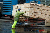 Stevedores unload timber shipped from the Baltic States at Immingham Dock on the River Humber. - Philip Wolmuth - 02-04-2004