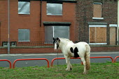 A horse grazes on the site of recently demolished terraced housing in a low demand area of South Bank, Middlesbrough - Philip Wolmuth - 28-09-2004