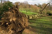 Fallen tree in Waterlow Park, Highgate, following a heavy storm. - Philip Wolmuth - 23-01-2007