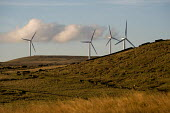 Some of the 26 turbines on Scout Moor outside Rochdale, Lancashire, the largest onshore wind farm in the UK. It is run by Peel Energy and provides energy for 40,000 homes. - Philip Wolmuth - 07-10-2010