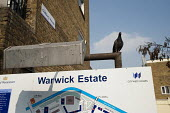 Pigeon on a sign at Warwick Estate, West London. - Philip Wolmuth - 25-03-2011