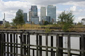 Canary Wharf and Barclays, HSBC and Citi bank buildings on the Isle of Dogs, seen from a derelict wharf on the south bank of the river Thames. - Philip Wolmuth - 26-08-2012